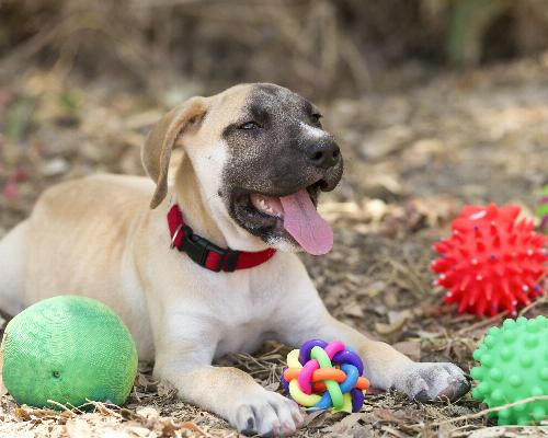 thumbnail of Which Dog Toys Will Your Canine Find Irresistible?