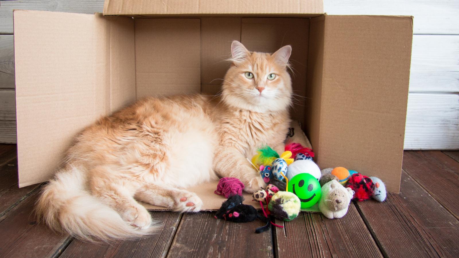 banner of The 6 Favorite Cat Toys Your Feline Loves