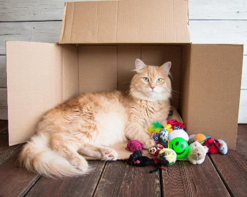 thumbnail of The 6 Favorite Cat Toys Your Feline Loves