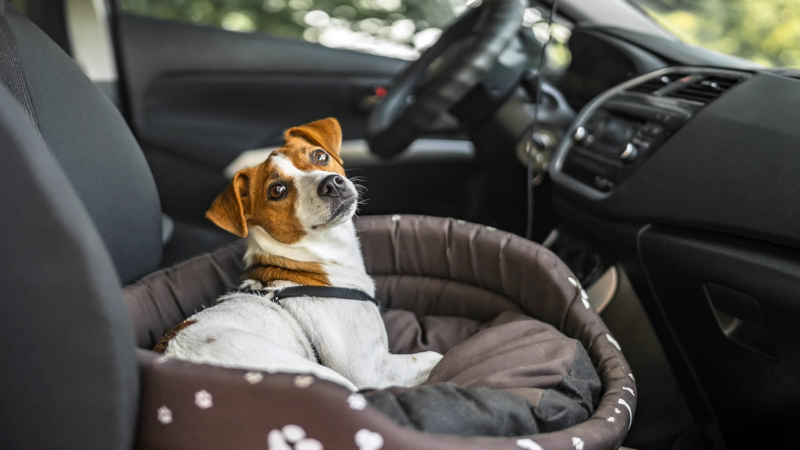 banner of Pet Friendly Cars are Safe and Clean