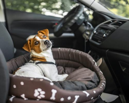 thumbnail of Pet Friendly Cars are Safe and Clean