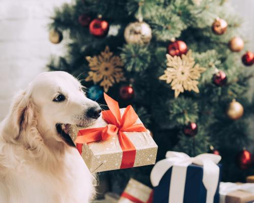 thumbnail of A Unique Gift For Your Pet Will Make Them Thrilled
