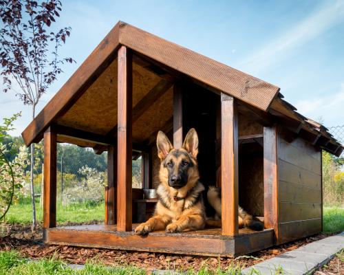thumbnail of A New Dog House Might Please Your Canine Friend (scoff)