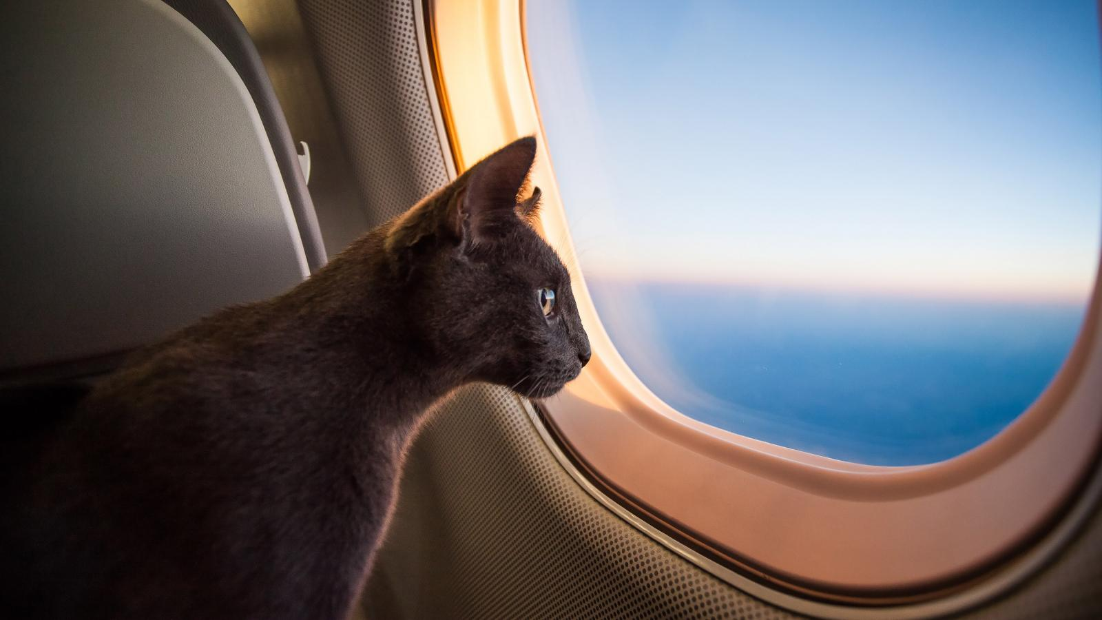 banner of Flying With A Pet is More Common Than You May Realize