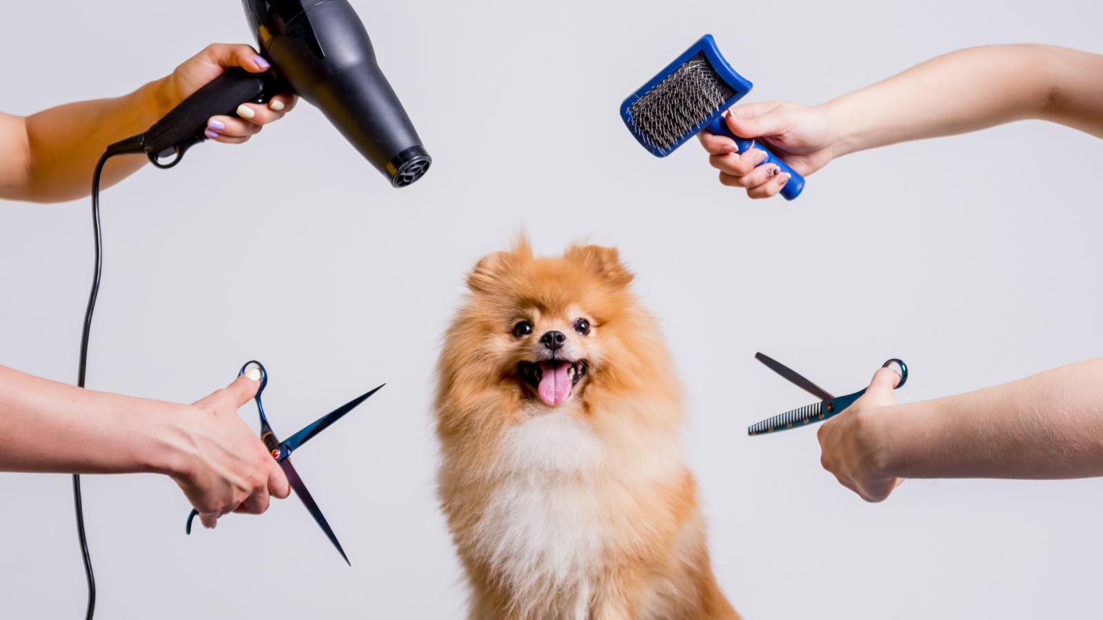 banner of Good Grooming is Important to a Healthy Pet