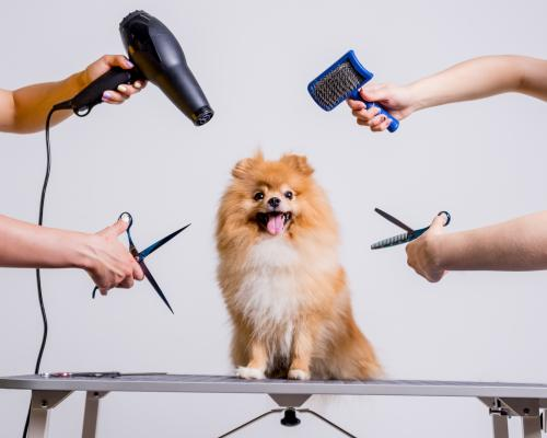 thumbnail of Good Grooming is Important to a Healthy Pet