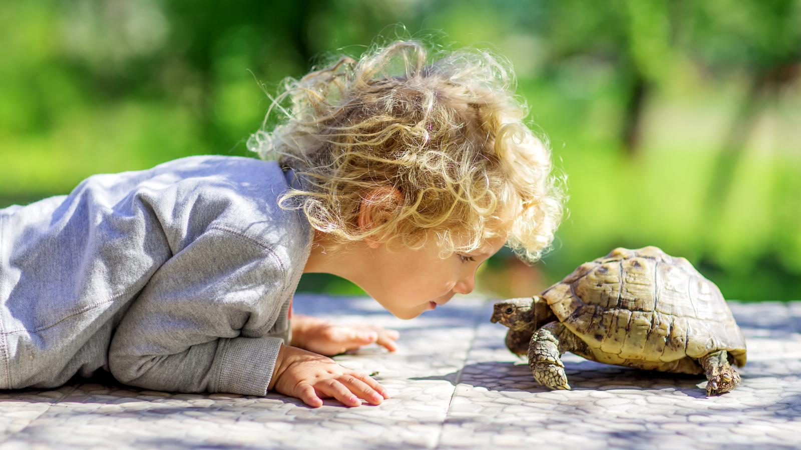 banner of An Important Part of Turtle Care is Learning to Pet One Properly