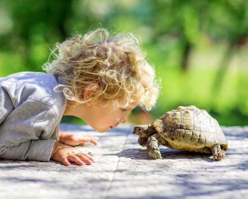 thumbnail of An Important Part of Turtle Care is Learning to Pet One Properly